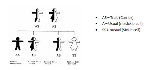 Sickle Cell Inheritance Diagram