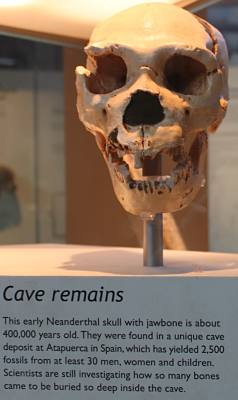 400 thousand year old Neanderthal skull remains found in Spain.  Displayed in Natural History Museum in London.
