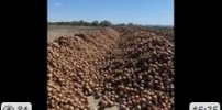 Gov Forces Farms to Shut Down Food Shortages Imminent