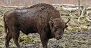 Europe & Middle Eastern Wildlife. Update 6