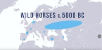 The First Horse Riders & Horse Domestication